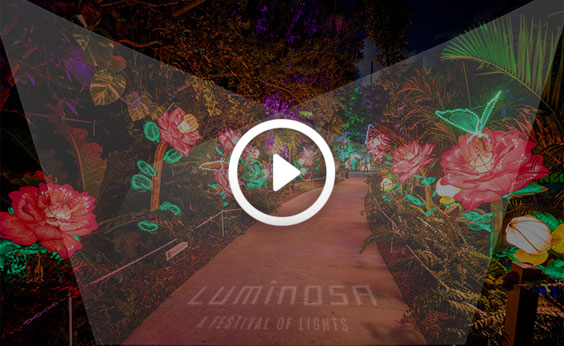 Luminosa Video